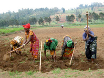 congo-farming